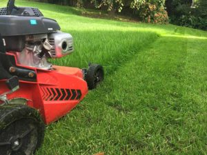 Cutting the lawn with a pushmower