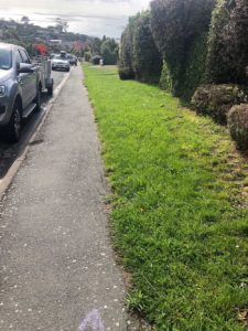 Edge and lawn before