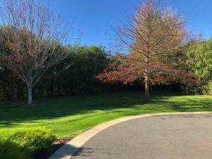 Driveway lawn care services