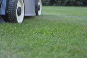 Christchurch lawn mowing services