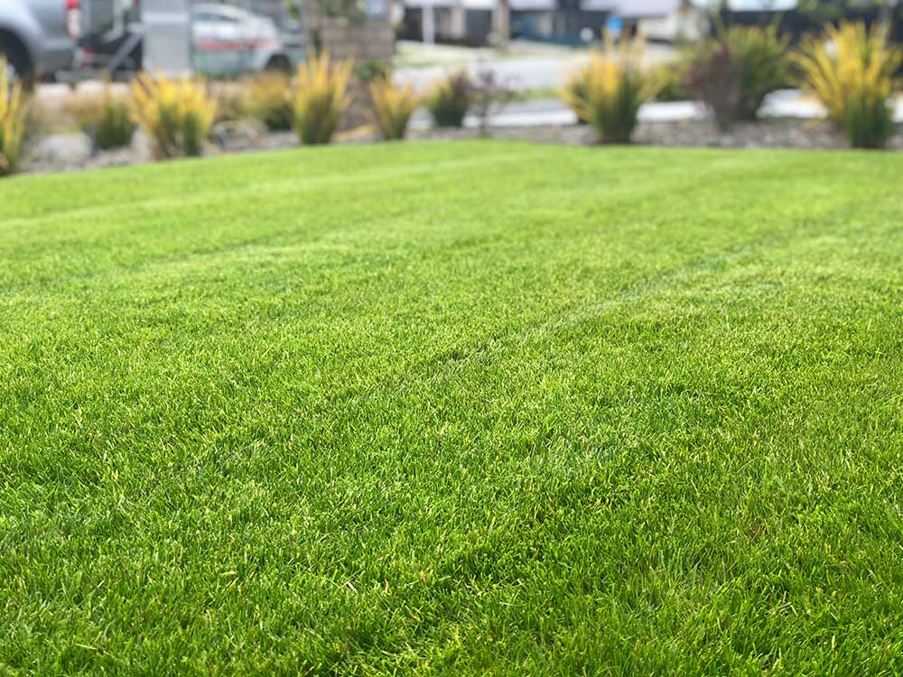 Lawn services Christchurch