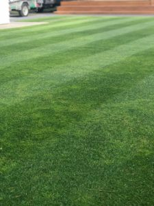 Lines of a perfect cut lawn