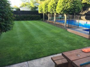 Regular lawn mowing services